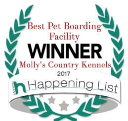 Best Pet Boarding Facility, Mollys Country Kennels, Happening List