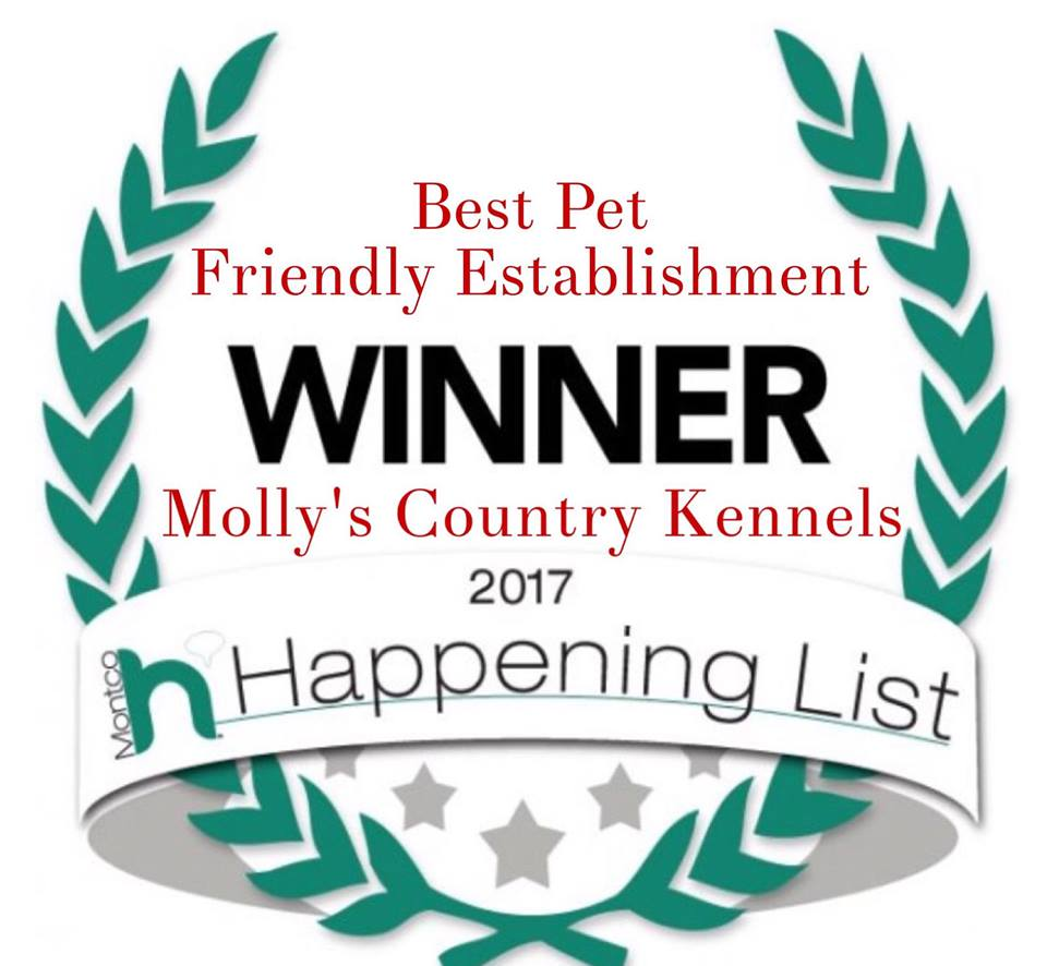 Boarding Rate Info Molly S Country Kennels