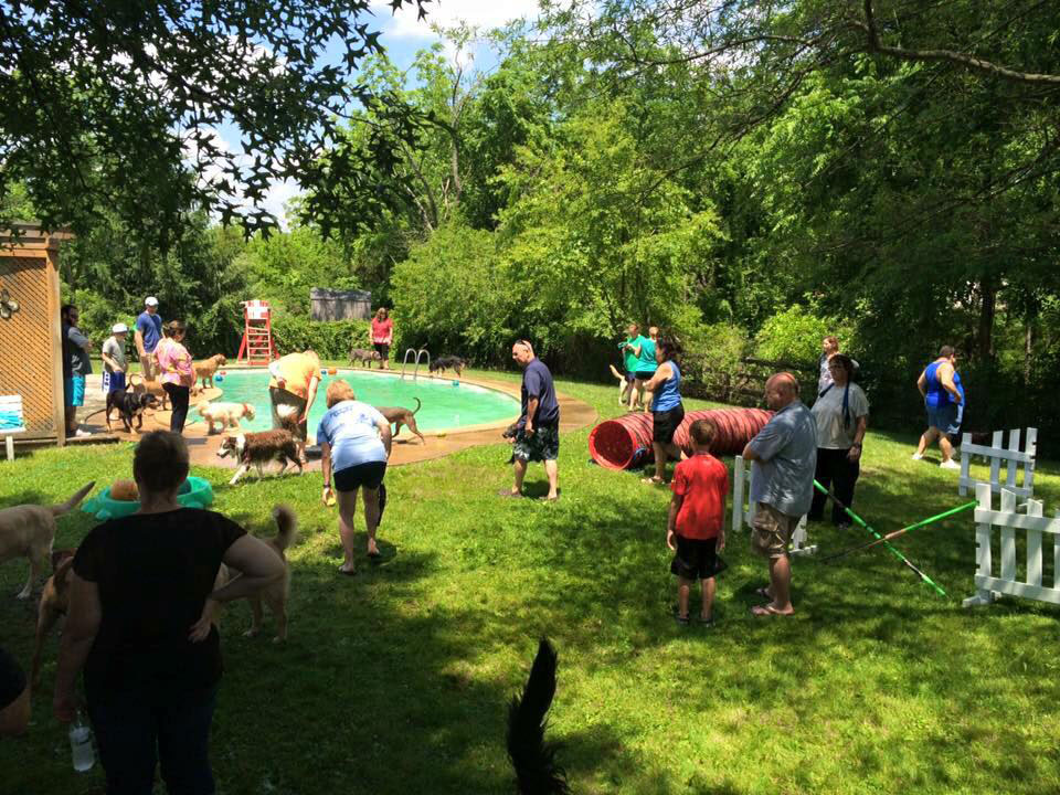 Mollys Country Kennels Splashfest