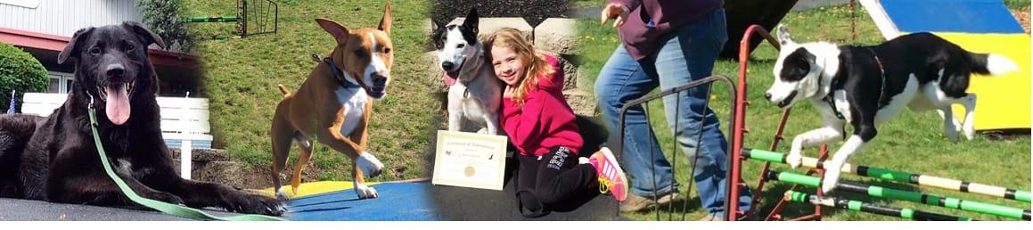 Mollys Country Kennels, Dog Boarding, Cat Boarding, Dog Training