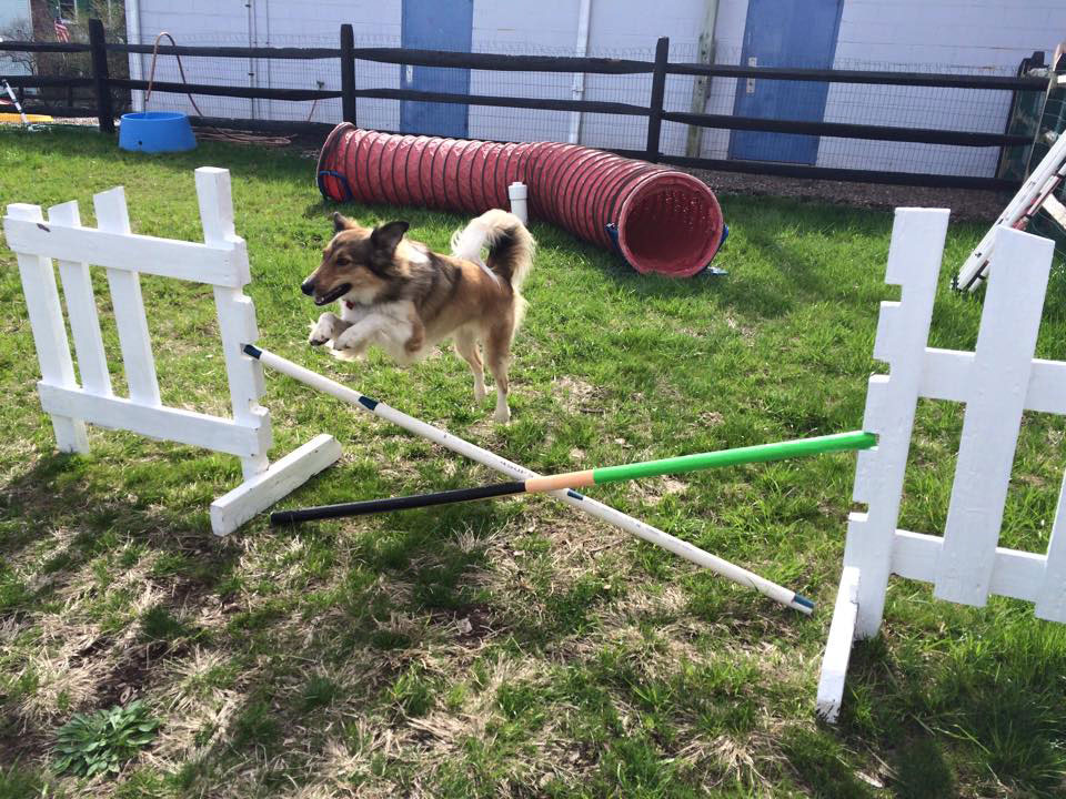 Mollys Country Kennels Agility Training 2