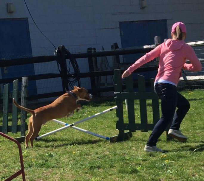 Mollys Country Kennels Agility Training 24