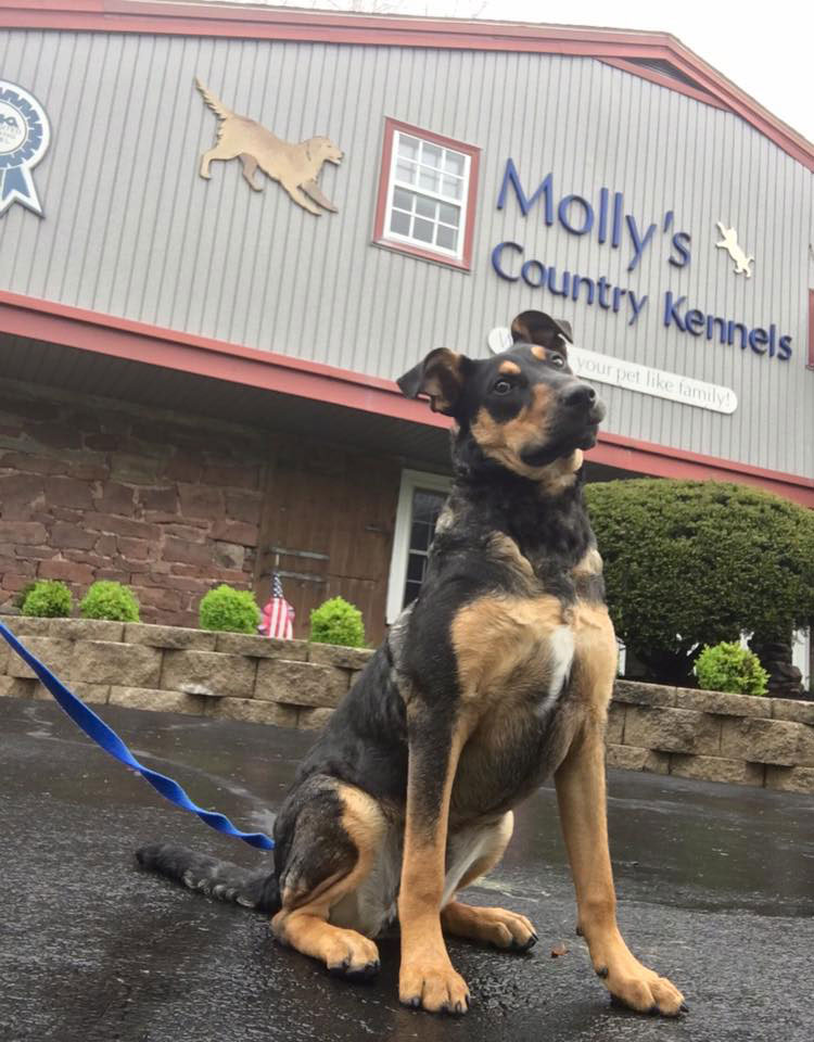 Mollys Country Kennels Obedience Training 4