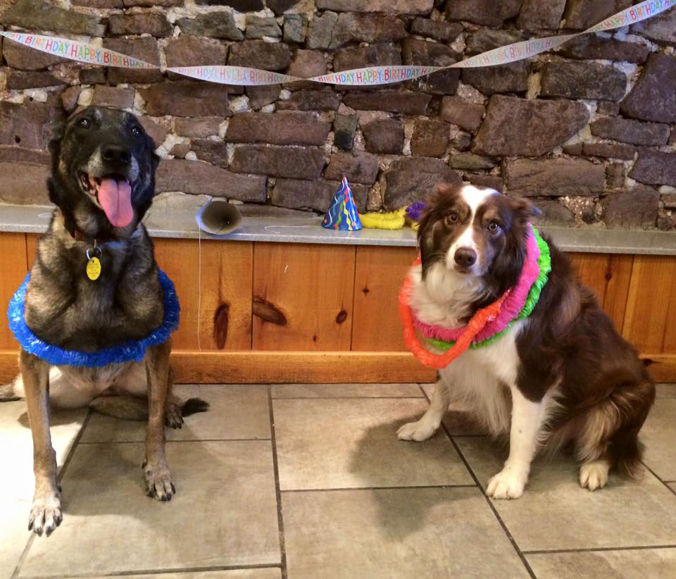 Mollys Country Kennels Pet Birthday Parties 1