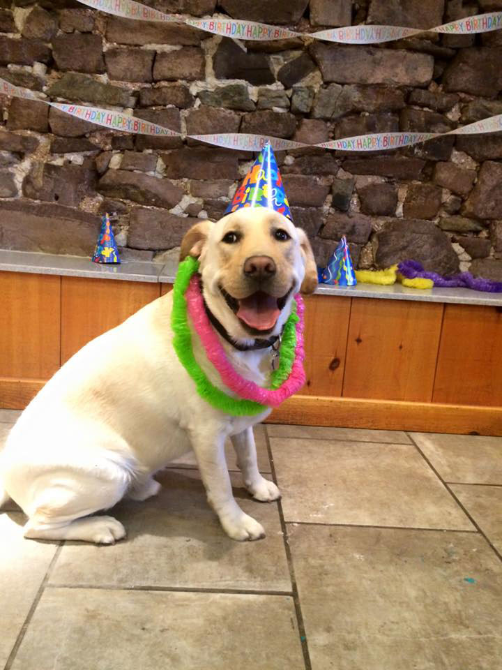 Mollys Country Kennels Pet Birthday Party 7