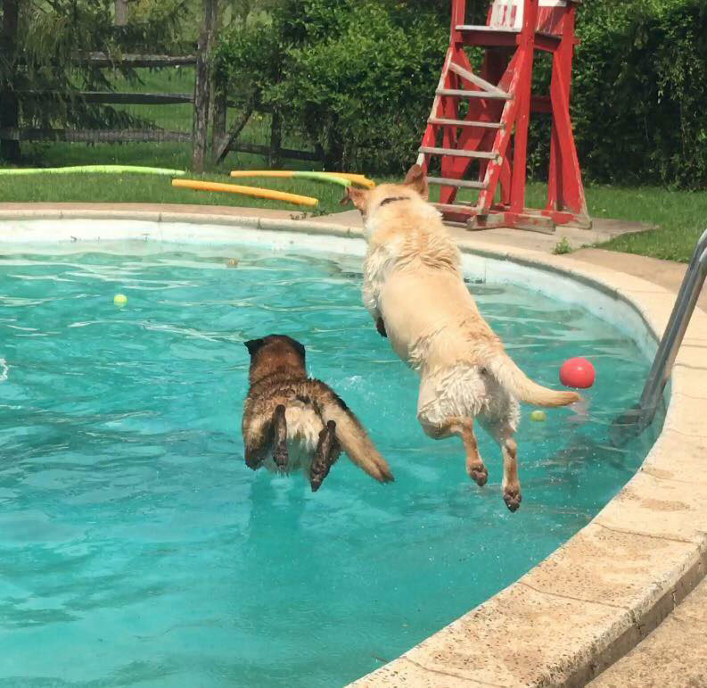 Mollys Country Kennels Pool 37