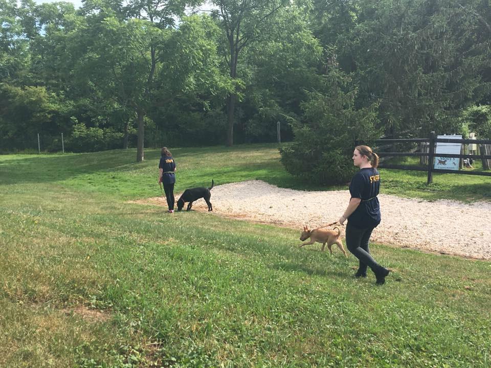 Mollys Country Kennels Trailblazers 5